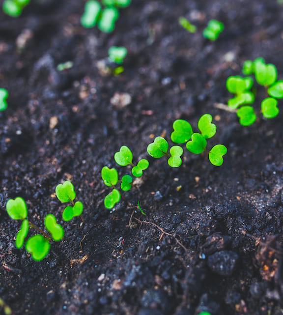 plant-leaf1